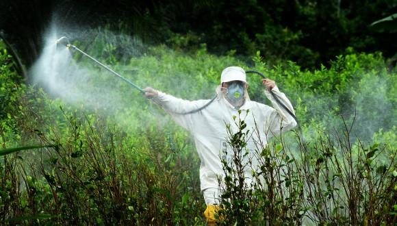 Un nou estudi demostra la ineficàcia de l'agricultura intensiva i identifica alternatives al glifosat