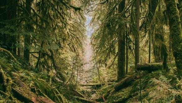 Preocupación por la deforestación y la tala ilegal de los bosques primarios de Rumania