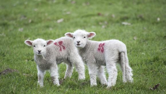El benestar animal ha d'estar a la Nova Estratègia Comercial de la UE